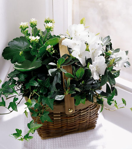 White Assortment Basket